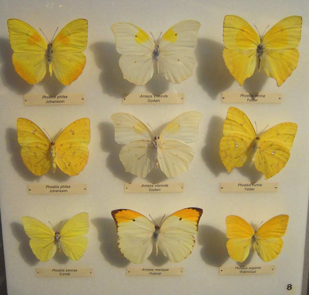 A shot from the Insectarium. A seperate building in the Botanical Gardens it houses walls and walls of specimens like these, plus some live creatures. I have never seen an entemology collection like this and it was truly incredible!
