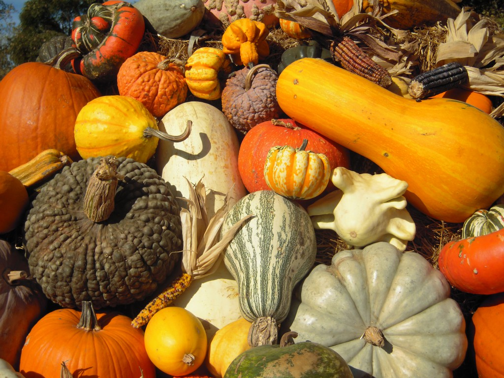 A close up of some gorgeous gourds and pumpkins! It's harvest time!