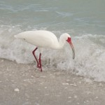 ibis blog